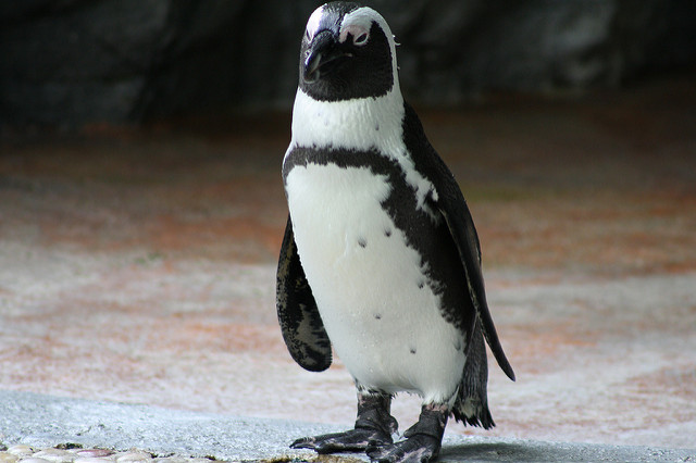 Google's Algorithm is Changing: Fear the Wrath of the Penguin